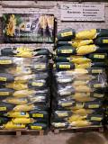 Продам семена подсолнечника Лейила Француской селекции Синельниково