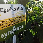 Насіння соняшника Суміко HTS Бровары