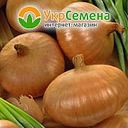Лук-севок Штутгартен Ризен (10/21) 0, 5 кг, Голландия Краматорск