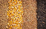 Купим кукурузу, подсолнечник, просо, ячмень Вольногорск