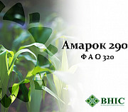 Насіння кукурудзи Амарок 290 (ФАО 320) Киев
