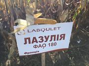 Гібрид кукурудзи ЛАЗУЛІЯ ФАО 180 Лабуле Киев