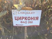 Гібрид кукурудзи ЦИРКОНІЯ ФАО 260 Лабуле Киев