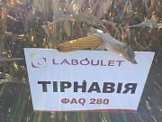 Гібрид кукурудзи ТІРНАВІЯ ФАО 280 Лабуле Семанис Киев