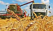 Перевозка зерна и зерновых грузов по Украине Винница