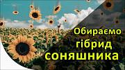 Насіння Соняшника на Посів 2020 | Купуйте Вигідно У Нас Киев