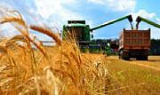 Перевезення зерна. Послуги зерновозів. Винница