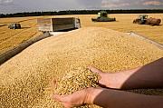 Услуги зерновозов, самосвалов. Перевозки зерна по Украине Винница