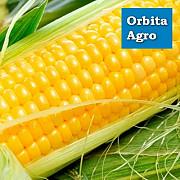 Семена кукурузы Галатея Киев