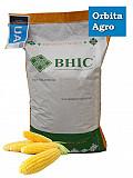 Семена кукурузы Гран 6 Киев