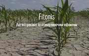 Фітоніс Киев