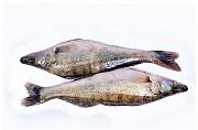 Риба опт. Свіжоморожена, в'ялена, риба х/к Ивано-Франковск