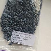Продам семена подсолнечника Запорожье