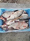 Продаж риби оптом Україна. Ровно