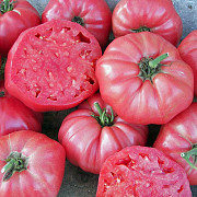 Продам рассаду/саженцы - помидоры, перец, капуста Селидово