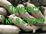 Поросята DanBred, PIC на откорм. Оптом от 100 голов! Киев