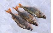 Рыба оптом Украина. Днепр