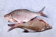 Свіжа риба. Густера, плотва, судак, лящ, окунь та ін. Львов