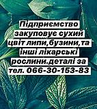 Куплю цвіт липи, бузини Полтава
