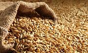 Зерно ячменя. Закупаем ячмень оптом Днепр