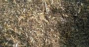 Закупівля зерновідходи, некондиція зернових, олійних, бобових Днепр