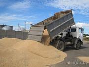 Зерновозы для перевозки зерна Украина Одесса
