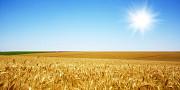 Послуги перевезення зернових. Перевезення зерна. Житомир