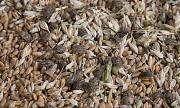 Некондиция и зерноотходы продать дорого Днепр