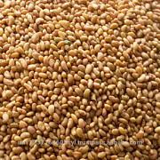 Продам семена костра/люцерны Запорожье