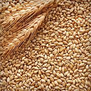 Куплю зернові, бобові. Продати некондицію, зерновідходи Харьков