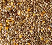 Закупаем некондицию, зерноотходы, зерновые и бобовые культуры Полтава