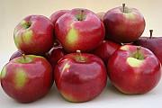 Закупаем яблоки Полтава
