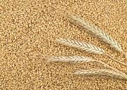 Куплю зерновые Днепр