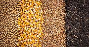 Куплю зернові, бобові, некондицію, зерновідходи. Чернигов