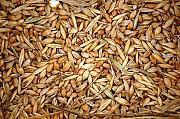 Зерновые, бобовые, некондицию, зерноотходы куплю дорого Сумы