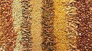Куплю соняшник, пшеницю, ячмінь, кукурудзу Запорожье