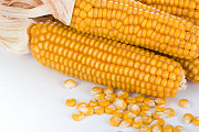 Насіння кукурудзи ФАБРІС ФАО 280 Киев