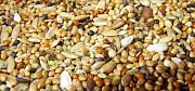 Зернові, бобові, некондицію, зерновідходи куплю дорого Днепр