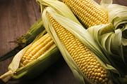 Куплю кукурудзу з місця. Запорожье