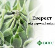 Насіння гібрида соняшнику Еверест (ВНІС) Високоолеїновий гібрид соняшнику Киев