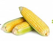 Куплю кукурузу. Продать кукурузу. Днепр