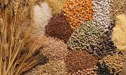 Куплю зерно, зерноотходы, некондицию Днепр