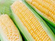 Куплю кукурудзу. Продати кукурудзу. Полтава