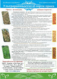 Сорт Полтавське золотисте (просо посівне) 1 репродукція, мішок 40 кг Полтава