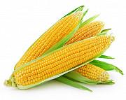 Куплю кукурудзу дорого Николаев