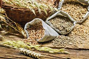 Куплю кукурудзу, пшеницю всіх класів, ячмінь, жито, овес. Зерновідходи. Чернигов