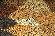 Кукуруза, пшеница, ячмень, рожь, овес, зерноотходы куплю Харьков