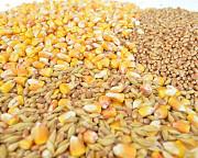 Зерноотходы, зерносмеси, все виды зерновых Полтава