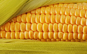Кукурудза продати. Кукурудза куплю Днепр