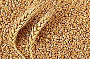 Зерносуміші, зерновідходи, зернові куплю Чернигов
